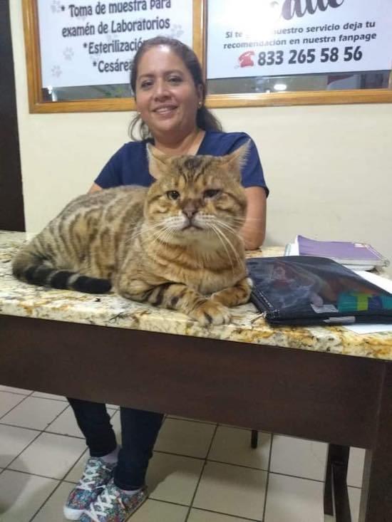 Rescatan a gato gigante en parque de Tampico; lo habían confundido con un ocelote